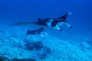 Дайвинг на Мальдивах, остров Ган атолл Адду или ИСПОРЧЕННЫЙ ОТПУСК!
